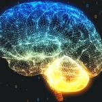 Healthy Brain Study plaatje